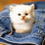 macici dzep08 Mačići u džepovima