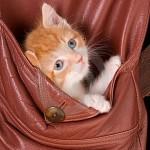 macici dzep15 Mačići u džepovima