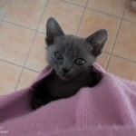 macici dzep07 Mačići u džepovima