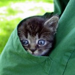 macici dzep01 Mačići u džepovima
