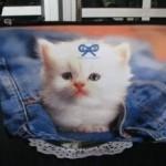 macici dzep03 Mačići u džepovima