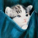 macici dzep19 Mačići u džepovima