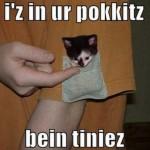macici dzep09 Mačići u džepovima