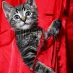 macici dzep11 Mačići u džepovima