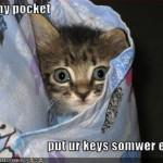 macici dzep04 Mačići u džepovima