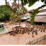 カンボジアの人々の生活を撮った写真 (32)