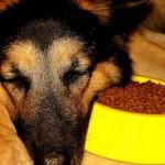 sleepy-doggies02