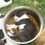 sleepy-doggies06