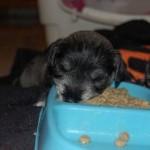 sleepy-doggies09