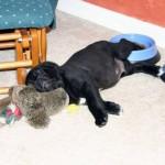 sleepy-doggies10