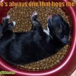 sleepy-doggies11
