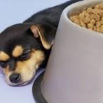 sleepy-doggies21