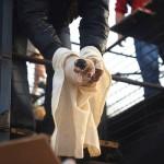 中国、食用として移送されていた犬500匹、救出 (6)