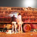 中国、食用として移送されていた犬500匹、救出 (5)