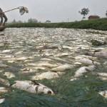 世界一汚い川 (5)