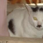 ヒトラーにそっくりな猫と家 (5)