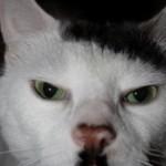 ヒトラーにそっくりな猫と家 (3)