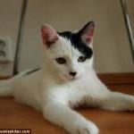 ヒトラーにそっくりな猫と家 (1)