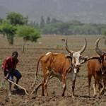 アフリカ エチオピアの写真 (19)