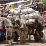 アフリカ エチオピアの写真 (34)