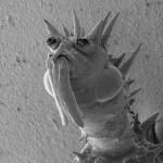 微生物の超拡大画像 (15)