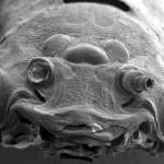微生物の超拡大画像 (10)