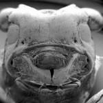 微生物の超拡大画像 (9)