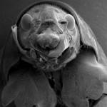 微生物の超拡大画像 (8)