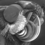 微生物の超拡大画像 (6)