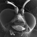 微生物の超拡大画像 (4)
