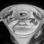微生物の超拡大画像 (3)