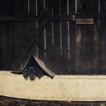 ダックスフンドのコスプレ写真 (10)