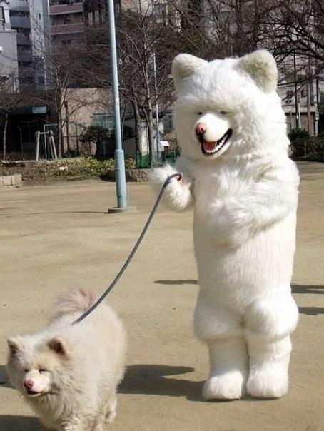 着ぐるみを着て犬の散歩