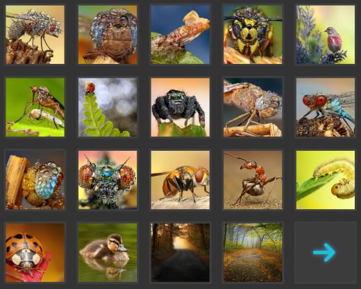虫の綺麗な写真集