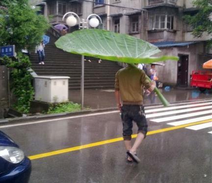 雨の日は葉傘で・・・