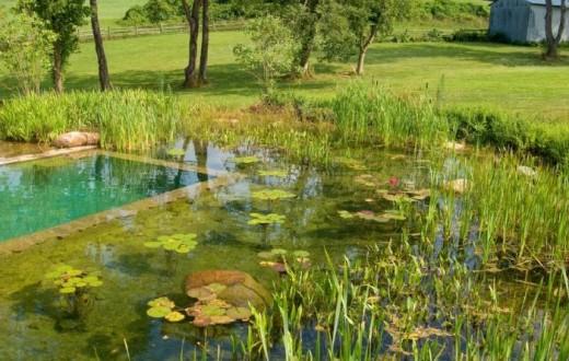 自然に溶け込んだ美しいプールの写真26枚
