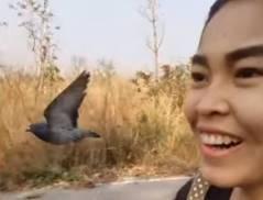 バイクで走行していたら鳩がついてきた!