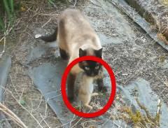 猫に捕らえられたウサギ、束の間の自由