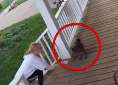 金髪女が猫を連れ去る瞬間を防犯カメラがとえる
