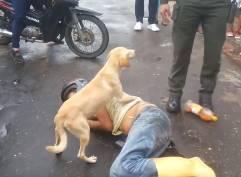 泥酔した飼い主を守るワンコ