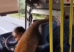 ゾウが待ち伏せしてバス内の食料を強奪