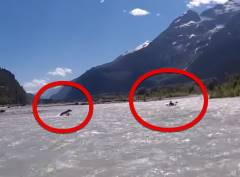 グリズリーが川下り中のカヤッカーを猛追跡