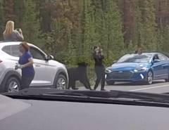 高速道路で撮影していた女が熊に襲われそうになる