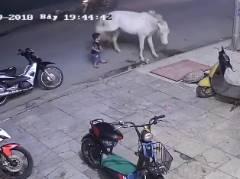 馬をからかっていた子供が強烈キックを食らう