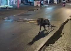逃げ出した馬が路上駐車車両に激突