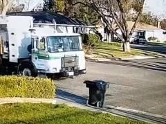 ゴミ箱を盗んだ意外な犯人