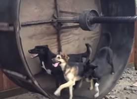 犬用ハムスターホイール