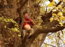 樹齢1300年の銀杏の木に登り枝を折る中国人
