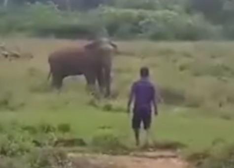 象に催眠術をかけようとした男、踏み潰される