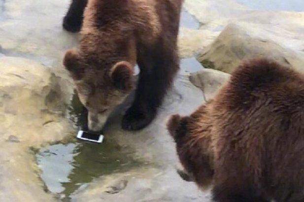 観光客がヒグマにiPhoneを投げる